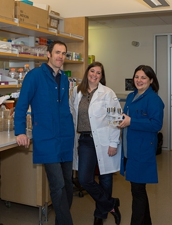Professors Aaron Hernday, Katrina Hoyer and Clarissa Nobile (from left to right) play integral roles in a new Valley fever research project.
