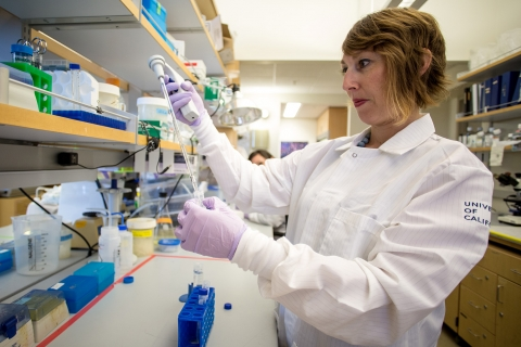 Professor Anna Beaudin is still setting up her lab, having just arrived this summer.